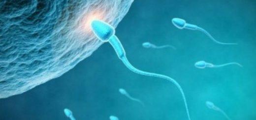 kak-dolgo-zhivut-spermatozoidi-na-vozduhe