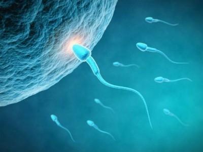 Лечение склеивания сперматозоидов