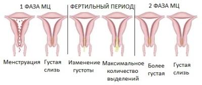 kak-menyaetsya-vlagalishe